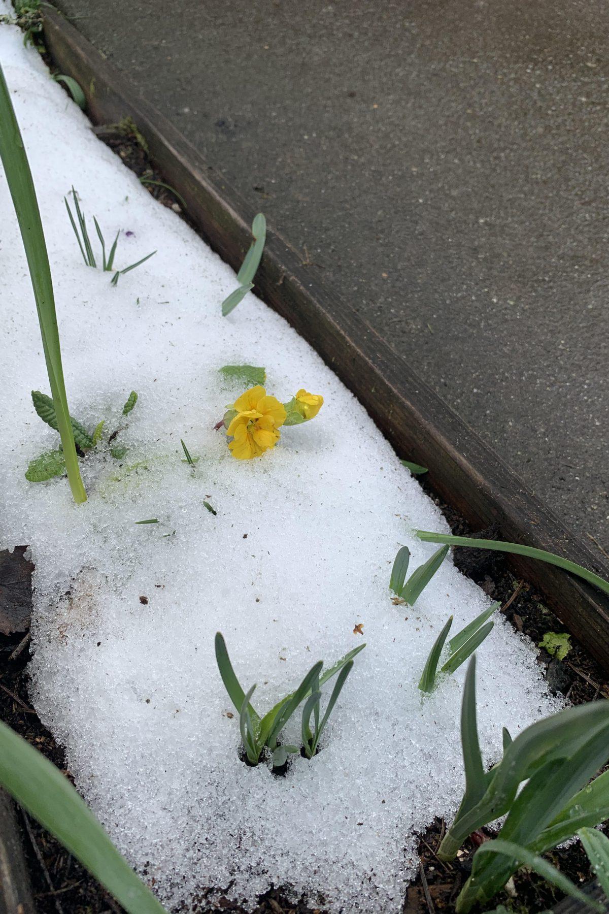 Carden Snow As Spring Approaches 2021